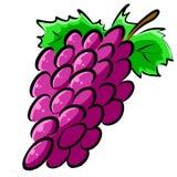Нарисованная вручную иллюстрация Clipart виноградин Стоковое Изображение RF