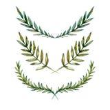 нарисованная вручную иллюстрация вектора Собрание акварели флористическое иллюстрация вектора
