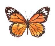 Нарисованная рука акварели бабочки монарха Стоковые Фото