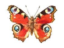 Нарисованная рука акварели бабочки павлина Стоковое Изображение RF
