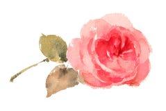 Нарисованная рука акварели Розы пинка Стоковая Фотография RF