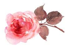Нарисованная рука акварели Розы пинка Стоковые Фотографии RF