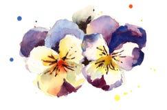 Нарисованная рука акварели цветков Pansies Стоковое Фото