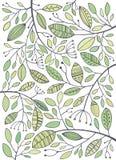 Нарисованная рука вектора зеленеет листья Стоковые Изображения