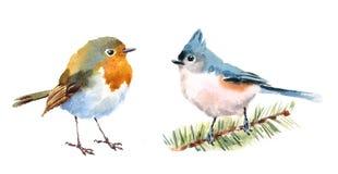 Нарисованная рука иллюстрации акварели птиц Titmouse и Робина установленная Стоковые Фото