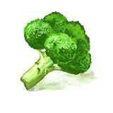 Нарисованная рука иллюстрации вектора брокколи vegetable Стоковые Фотографии RF
