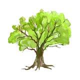 Нарисованная рука иллюстрации вектора дерева покрашенной Стоковые Фото