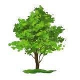 Нарисованная рука иллюстрации вектора дерева покрашенной Стоковая Фотография