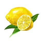 Нарисованная рука иллюстрации вектора лимона плодоовощ Стоковое Фото