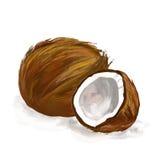Нарисованная рука иллюстрации вектора кокоса покрашенной Стоковое Изображение RF