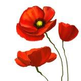 Нарисованная рука иллюстрации вектора маков цветка Стоковая Фотография RF