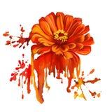 Нарисованная рука иллюстрации вектора tsiniya цветка Стоковые Фотографии RF