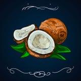 Нарисованная рука кокоса Иллюстрация вектора ботаники Doodle здоровой nutrient еды Линия etch эскиза гравировки кокоса Органическ бесплатная иллюстрация