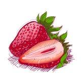 нарисованная рука плодоовощ Стоковое Изображение RF