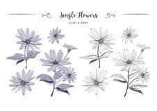 Нарисованная рука цветет стоцветы эскиза, маргаритки Страница расцветки, цветок артишока Иерусалима, ботаническое флористическое Стоковые Фото