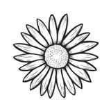 Нарисованная рука цветка стоцвета иллюстрация штока