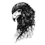 Нарисованная рука doodle птицы орла Стоковые Изображения RF