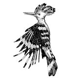 Нарисованная рука doodle птицы удода Стоковые Изображения