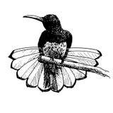Нарисованная рука doodle птицы Стоковое Изображение RF