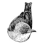 Нарисованная рука doodle птицы Стоковое Изображение
