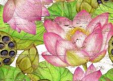Нарисованная рукой ботаническая картина лотоса Стоковые Фото
