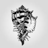 Нарисованная рукой винтажная раковина моря Стоковые Фотографии RF