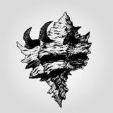 Нарисованная рукой винтажная раковина моря Стоковое Изображение