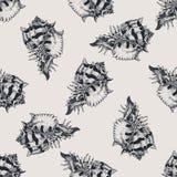 Нарисованная рукой винтажная экзотическая картина конспекта раковины Стоковая Фотография