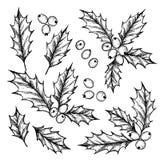 Нарисованная рукой иллюстрация вектора - падуб весёлый Рождество флористический d иллюстрация штока