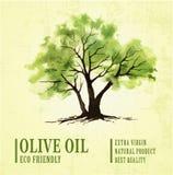 Нарисованная рукой иллюстрация оливкового дерева с акварелью Стоковые Фотографии RF