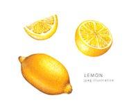 Нарисованная рукой иллюстрация растра лимона установленная стоковое изображение