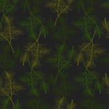 Нарисованная рукой картина ветви сосны безшовная Стоковые Изображения RF