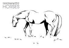 Нарисованная рукой лошадь od иллюстрации на луге Стоковые Фотографии RF