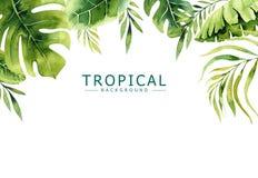 Нарисованная рукой предпосылка тропических заводов акварели Экзотическая ладонь выходит, дерево джунглей, элементы Бразилии тропо иллюстрация вектора
