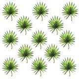 Нарисованная рукой тропическая предпосылка листьев бесплатная иллюстрация