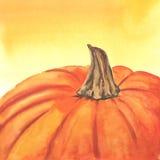 Нарисованная рукой тыква акварели Стоковое Изображение