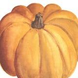 Нарисованная рукой тыква акварели Стоковая Фотография RF