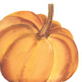 Нарисованная рукой тыква акварели Стоковая Фотография