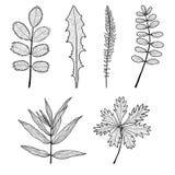Нарисованная рукой черно-белая иллюстрация листьев Стоковая Фотография RF