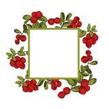 Нарисованная рукой ягода леса Lingonberry Cowberry дополнительный иллюстратор рамки формы eps самана включает вектор бесплатная иллюстрация