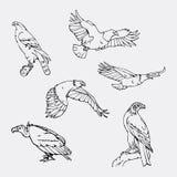 Нарисованные вручную графики карандаша Установленные хищные птицы Стоковое Изображение