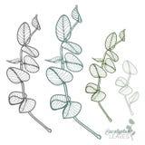 Нарисованные вручную установленные листья евкалипта Стоковое Изображение RF