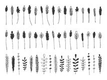 Нарисованные рукой ботанические декоративные элементы дизайна Стоковое Изображение