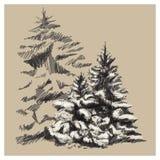 Нарисованные рукой деревья вектора Стоковые Изображения RF