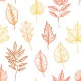 Нарисованные рукой иллюстрации вектора листья делают по образцу безшовное f Стоковые Фото