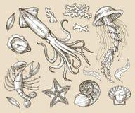 Нарисованные рукой морепродукты эскиза установленные, морские животные также вектор иллюстрации притяжки corel Стоковое Изображение RF