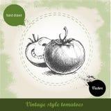 Нарисованные рукой томаты стиля эскиза на предпосылке года сбора винограда grunge Иллюстрация вектора