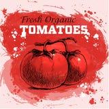 Нарисованные рукой томаты стиля эскиза Стоковые Фотографии RF