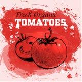 Нарисованные рукой томаты стиля эскиза Бесплатная Иллюстрация