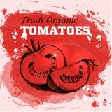 Нарисованные рукой томаты стиля эскиза Иллюстрация вектора